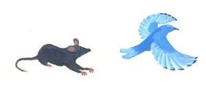 rat and bluebird